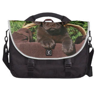 Brown one chocolate labrador retriever puppy in th commuter bags
