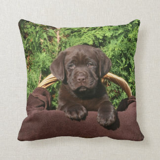 Brown one chocolate labrador retriever puppy in throw pillow