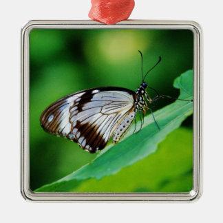 Brown oscuro y mariposa gris adorno cuadrado plateado