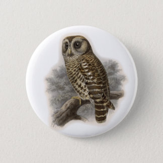 Brown Owl Button