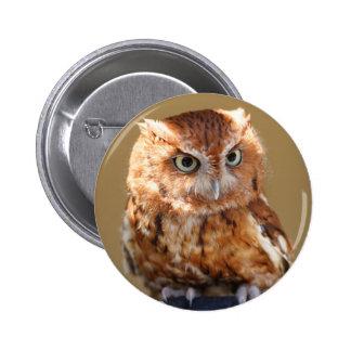 Brown Owl Pins