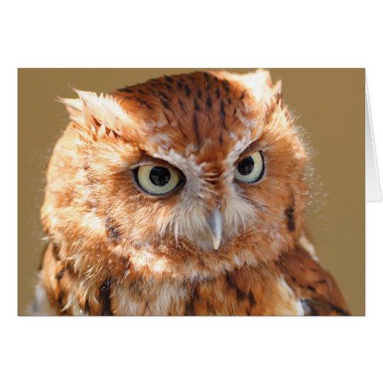 Brown Owl Card