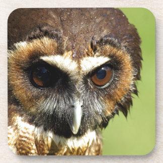 Brown Owl Drink Coaster
