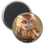 Brown Owl Magnet