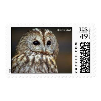 Brown Owl Postage