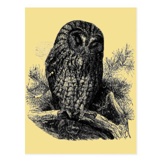 Brown Owl Sleeping Postcard