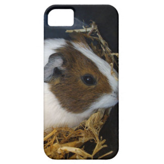 Brown_Patch_Guinea-Pig,_ iPhone 5 Cover