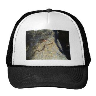 Brown pattern snake on Rock Trucker Hat