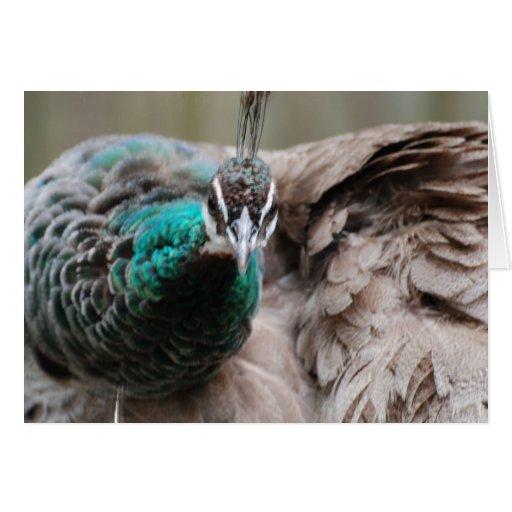 Brown Peacock  Greeting Card