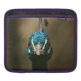 Brown Peacock Portrait Photograph Sleeves For iPads