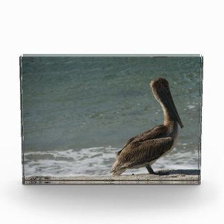 Brown Pelican Acrylic Award