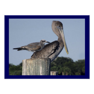 Brown Pelican and Gull Perched on Dock Posts Poster