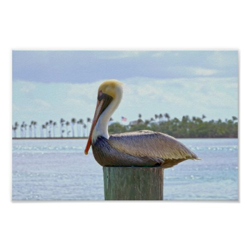 Brown Pelican and Palm Trees Poster