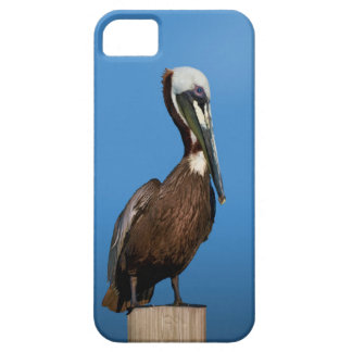 Brown Pelican Bird on a Post iPhone SE/5/5s Case