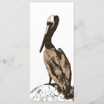 Brown Pelican Birds Wildlife Animals