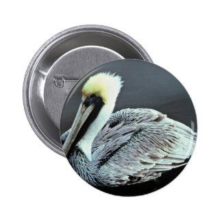 Brown Pelican Pins