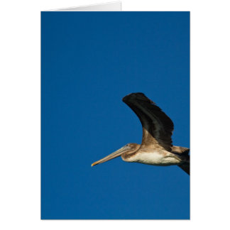 Brown Pelican Card
