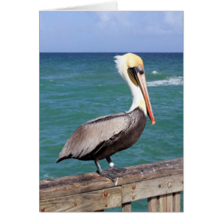 Brown Pelican Card