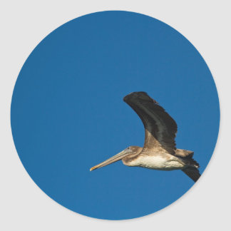 Brown Pelican Classic Round Sticker