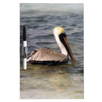 Brown Pelican Dry-Erase Board