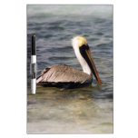 Brown Pelican Dry Erase Whiteboards