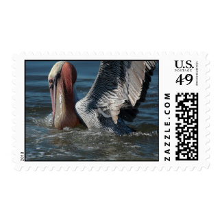 Brown Pelican: extreme closeup 1 Postage Stamps