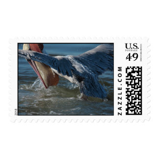 Brown Pelican: extreme closeup 2 Postage Stamps