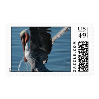 Brown Pelican: extreme closeup 3 Postage Stamps
