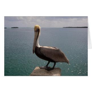 Brown Pelican Florida Keys Card