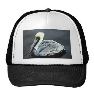 Brown Pelican Mesh Hat