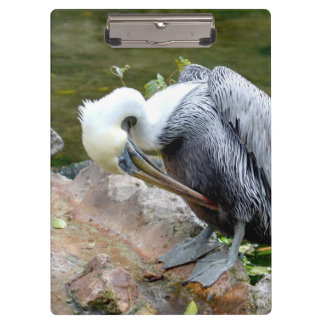 brown pelican head bowed bird c clipboards