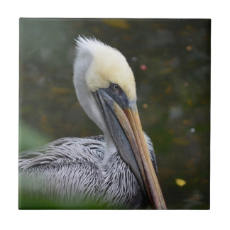 brown pelican head view facing right bird ceramic tile