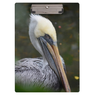 brown pelican head view facing right bird clipboards