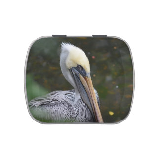 brown pelican head view facing right bird jelly belly candy tins