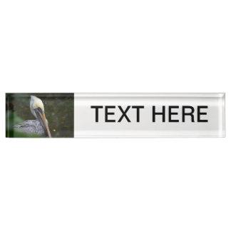 brown pelican head view facing right bird name plates
