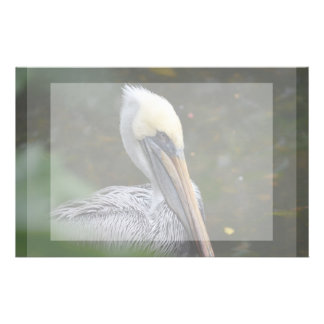 brown pelican head view facing right bird stationery