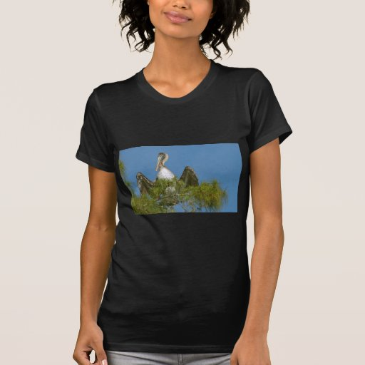 Brown Pelican in a Pine Tree T Shirts
