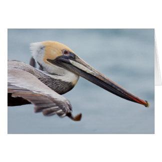 Brown Pelican in flight Card