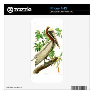Brown Pelican John James Audubon Birds of America Decals For The iPhone 4S