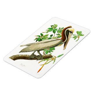Brown Pelican John James Audubon Birds of America Magnet