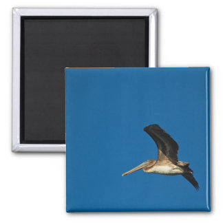 Brown Pelican Magnet