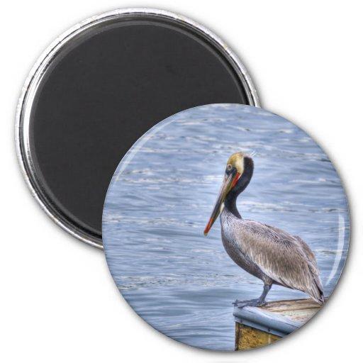 Brown Pelican Magnet