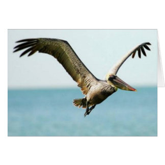 Brown Pelican, Marco Island, Florida, 2010 Card