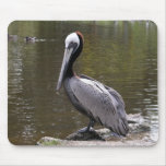 Brown Pelican Mouse Pad