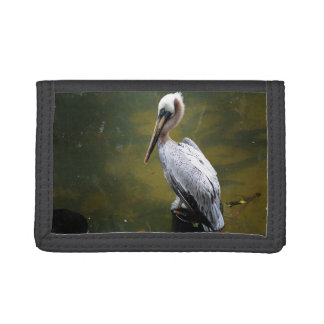 brown pelican near green water fish swimming trifold wallet