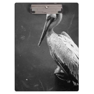 brown pelican near water fish swimming bw clipboard