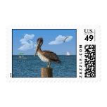 Brown Pelican on a Post Stamp