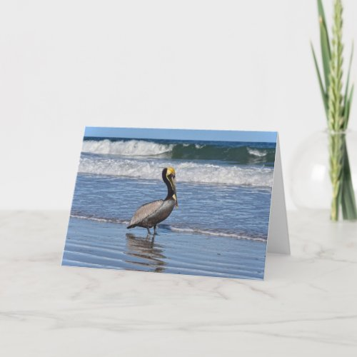 Brown Pelican on the Beach in Florida Card