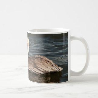 Brown pelican (Pelecanus occidentalis) Mug