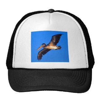 Brown Pelican (Pelecanus occidentalis) Trucker Hat